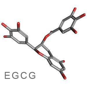 Informació per a les Famílies sobre la investigació de la EGCG